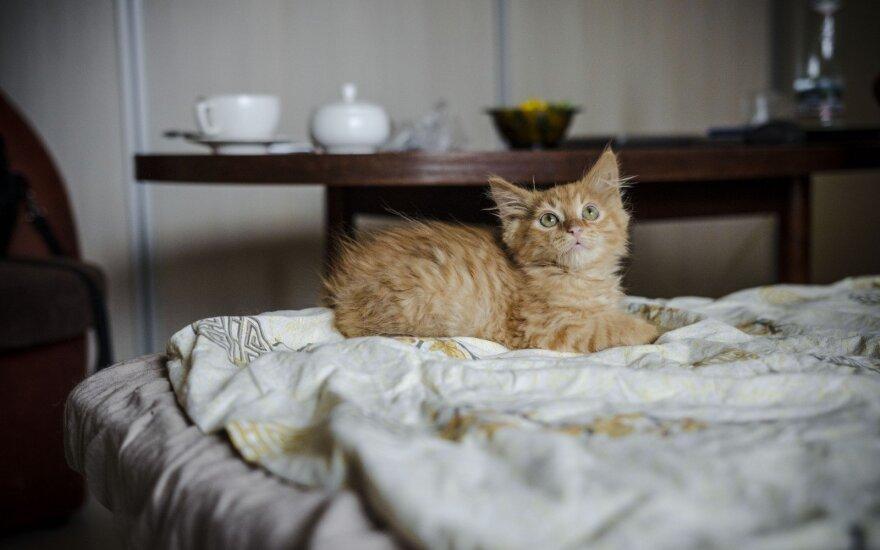 """Nuo """"ūkiško"""" susidorojimo išgelbėti keturi kačiukai ieško namų!"""