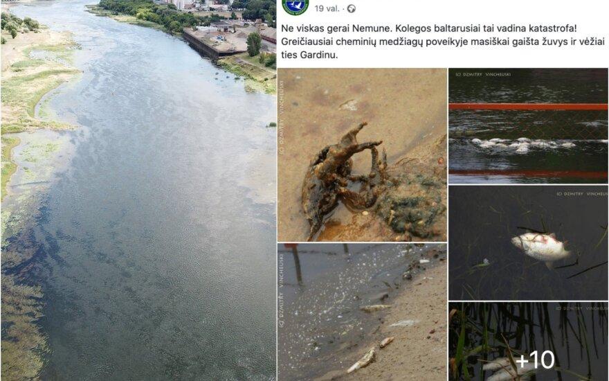 Baltarusijoje užfiksavus gaištančius vandens gyvūnus skelbiami išsamesnių Nemuno vandens tyrimų rezultatai