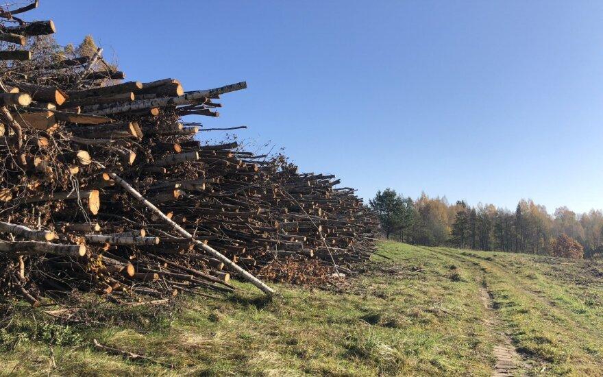 Siūlo riboti miškų kirtimą: saugomose teritorijose reikia jį ne kirsti, o tvarkyti