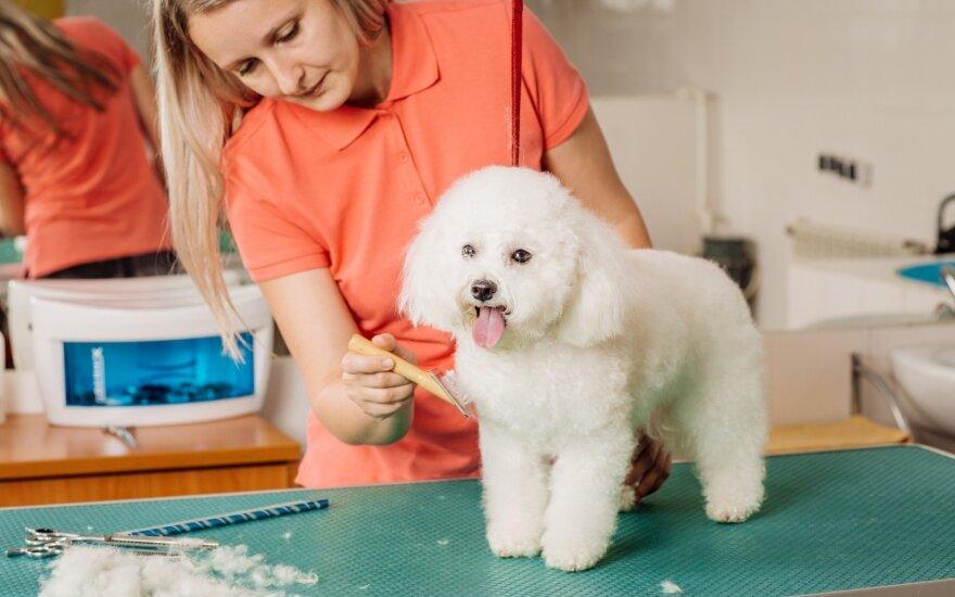 Šunų stilistė: šunimis daugelis rūpinasi kaip vaikais