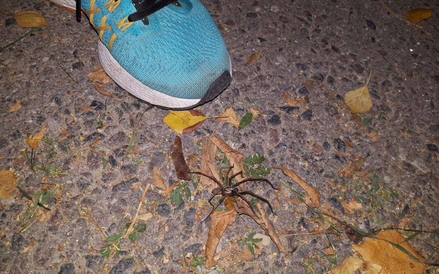 Gyvenamajame Vilniaus rajone nustebino didžiulis voras