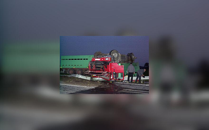 Greitkelyje apvirto karves gabenęs automobilis