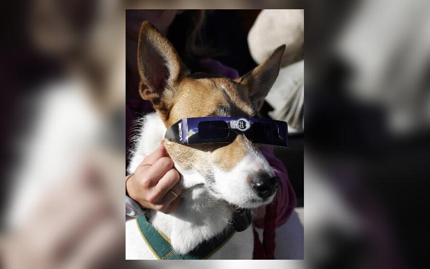 Madride šunelis kartu su žmonėmis stebi saulės užtemima.