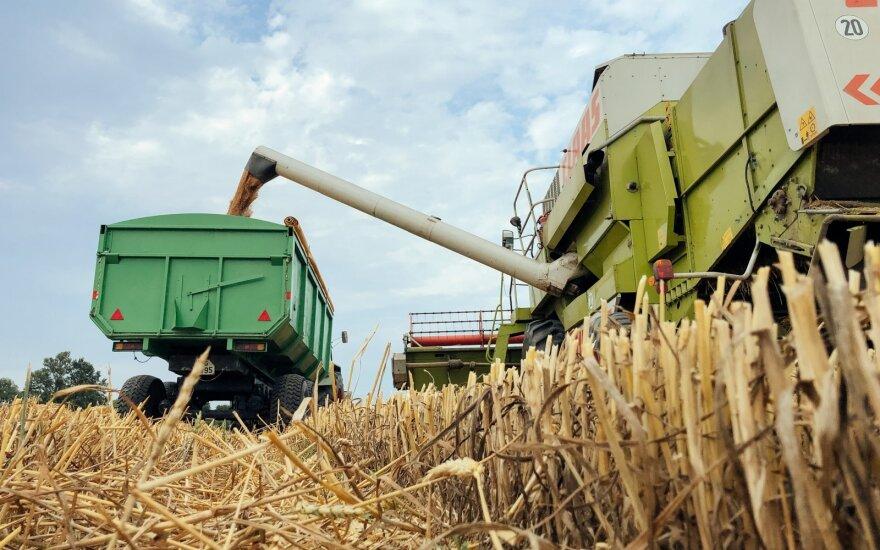 Paskelbtos pasaulinės grūdų derliaus prognozės – lietuviams džiūgauti nėra ko