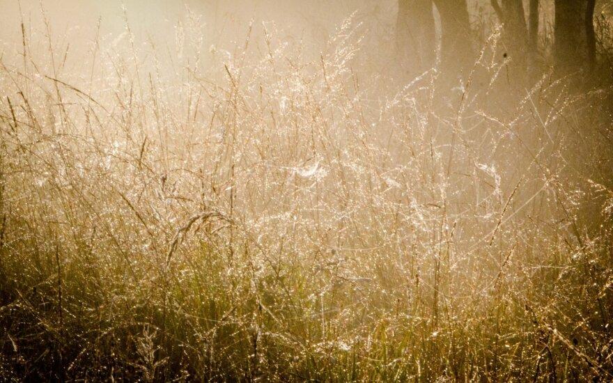 Klysta tvirtinantys, kad daugiausia šviesos skleidžia Saulė