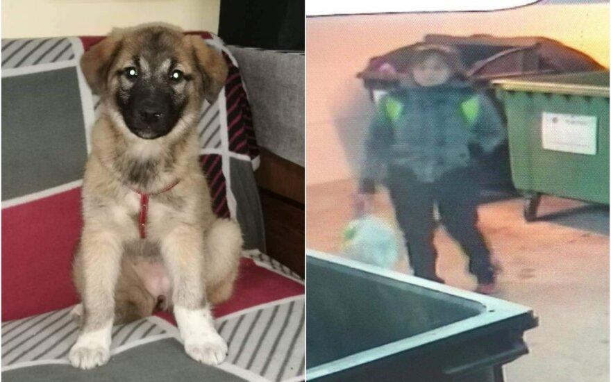 Išmestas šuo