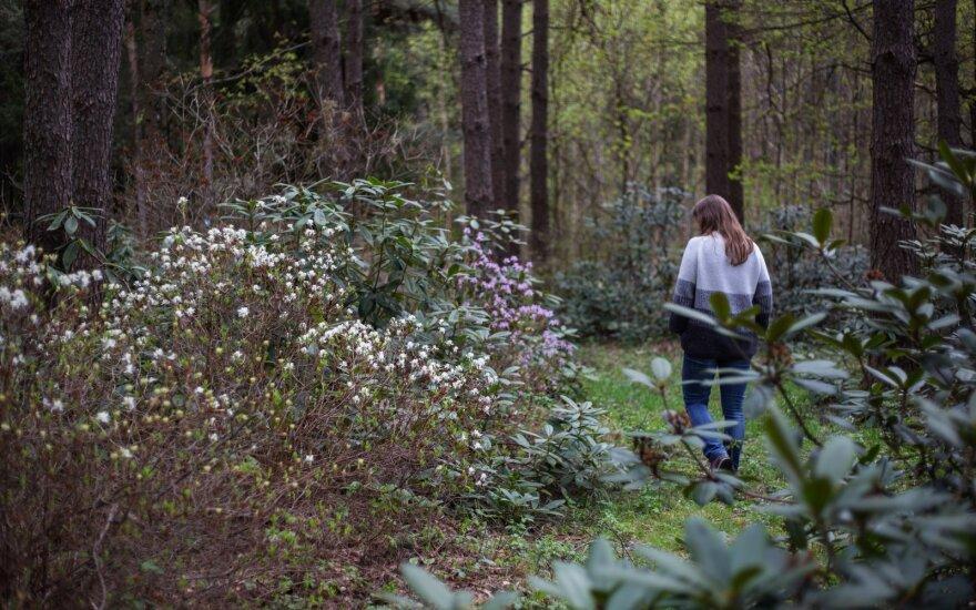 Vainagių miškas