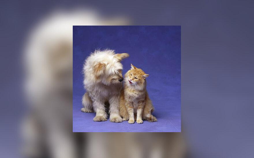 šuo, katė, naminiai gyvūnai