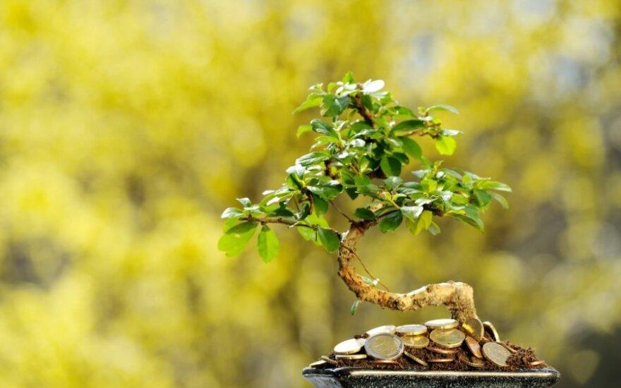 Istorija. Pinigų medžio paieškos žemės ūkyje už 10 eurų/val.