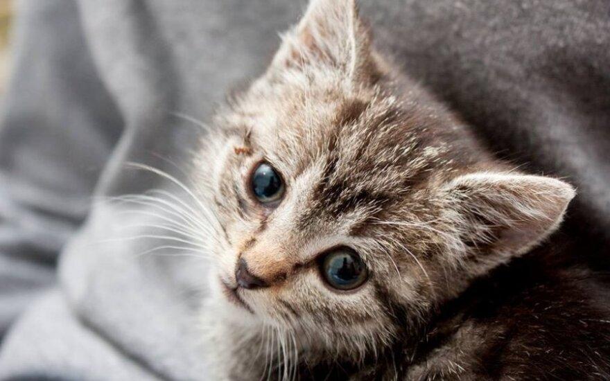 Mažylis kačiukas ieško šiltų namų