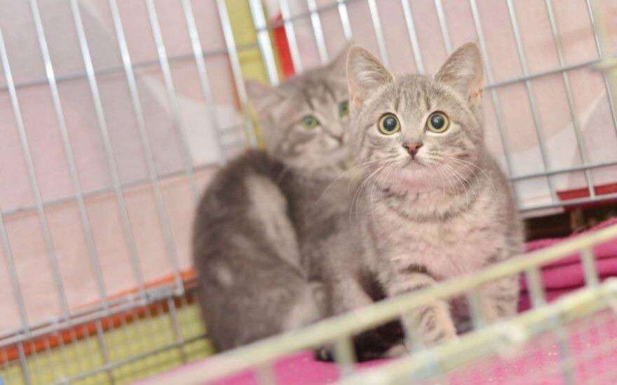 """Trys išskirtiniai katinėliai """"alučiai"""" ieško namų!"""