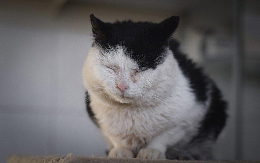 Žmogaus nuskriaustas katinėlis ieško namų