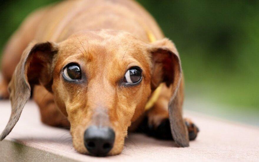 Kodėl šunys liūdi?