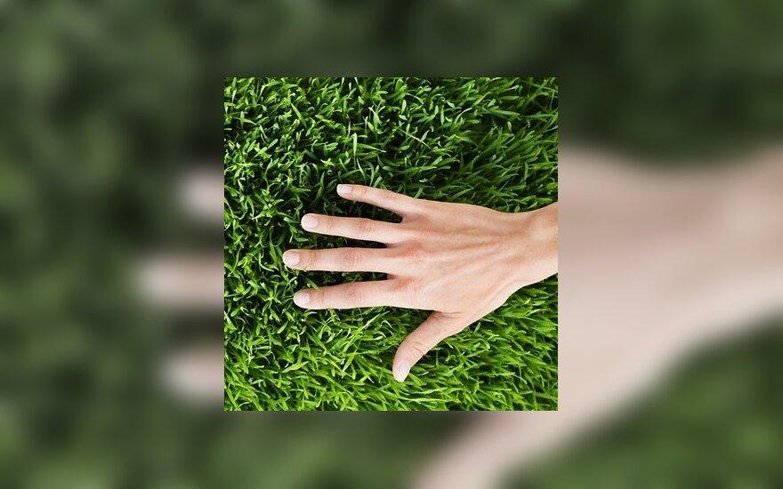Žalia žolė