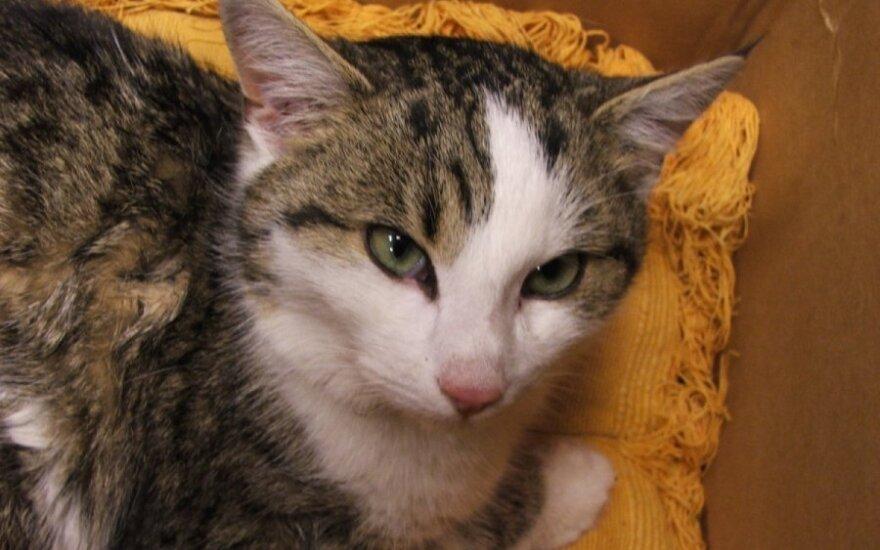Išsivadavęs iš spąstų, katinėlis Rufas kraujuojančia letenėle prašosi pagalbos