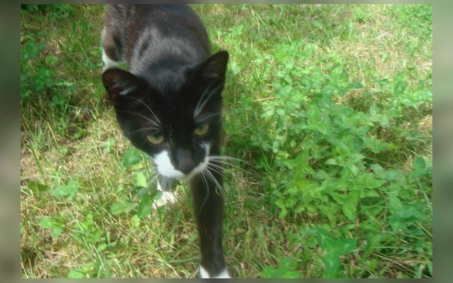 Ypatingo gerumo katytė Maša ieško namų