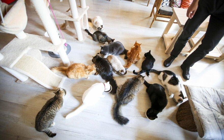 Primena pamišimą: katės, kurios turi savo fanų klubą ir švenčia gimtadienius