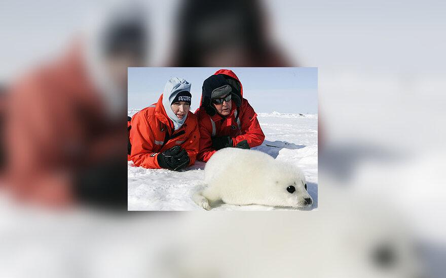 Paulas McCartney (dešinėje) su žmona Heather Kanadoje stebi ruoniuką