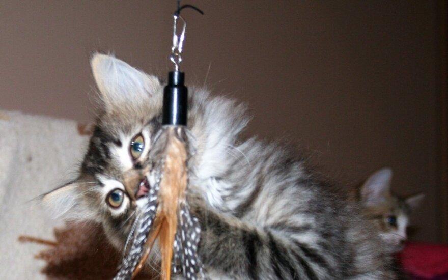 """Gyvūnų globos organizacijai """"Šlapia nosytė"""" labai reikia paramos"""