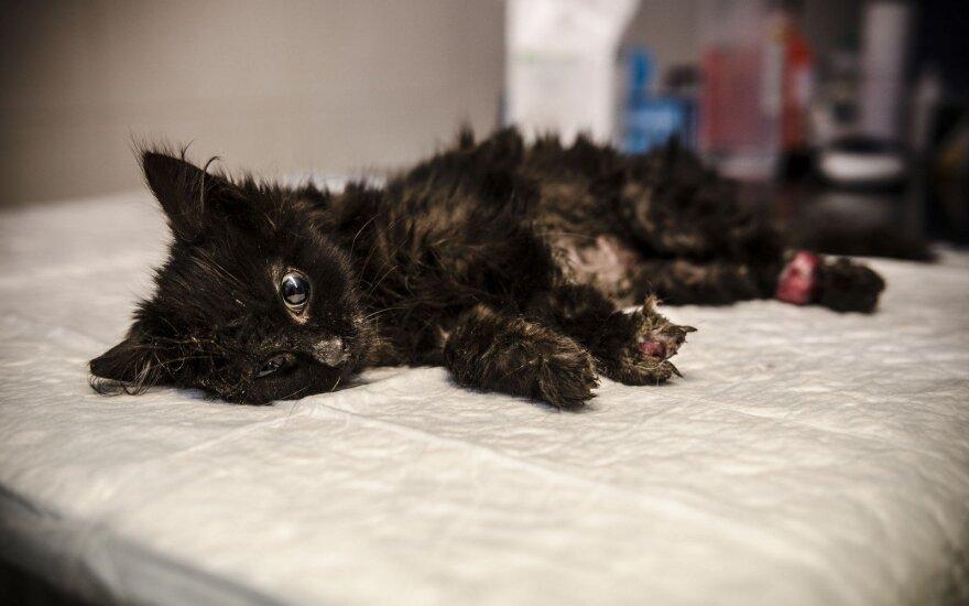 Šiaure, pasveik!: prašo paremti katytės gydymą