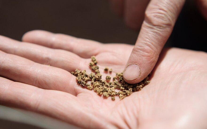 Smulkūs ūkininkai, grūdai, daržas
