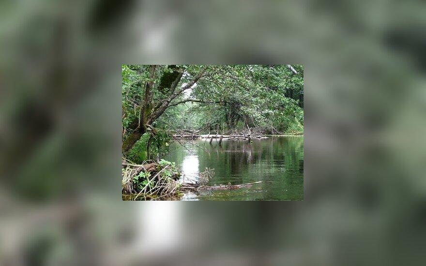 Dzūkija. Idiliškas vaizdelis plaukiant turistų nenuniokota upele. Renatos Apanavičienės nuotr.