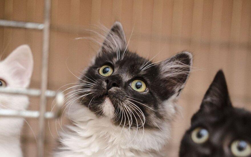 Gražesnių katinėlių nesate matę: žavioji trijulė ieško namų