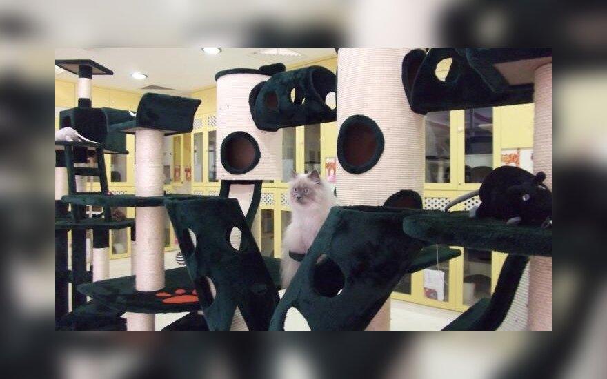 Asociatyvi nuotr. / Naminių gyvūnų viešbutis Dubajuje