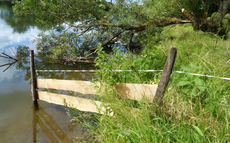 Minijos draustinio pakrantė - ganyklinė tvora