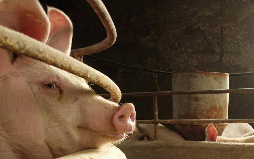 Kinų meilė kiaulienai kelia įtampą šalies degalų rinkoje