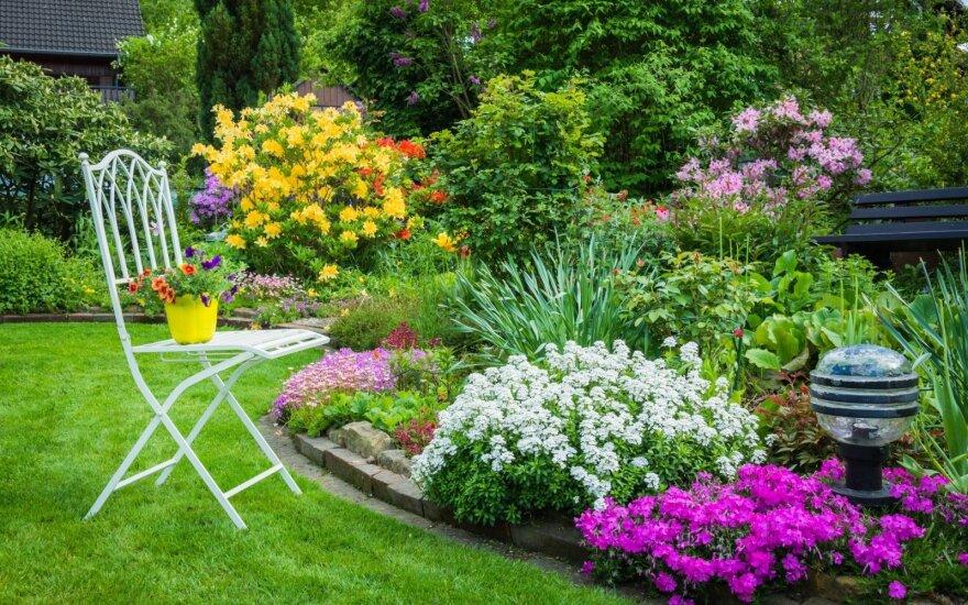 Gražiausios šių metų sodų tendencijos: natūralumas ir romantika