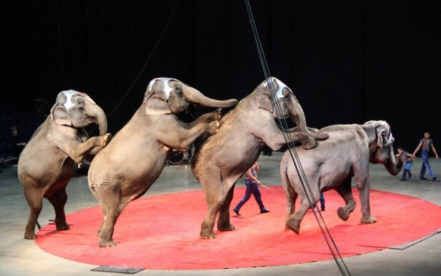 Atviras laiškas Seimo nariams: pagrindinės priežastys, kodėl reikia atsisakyti cirko su laukiniais gyvūnais