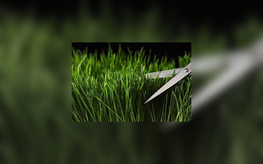 Žirklės, žolė