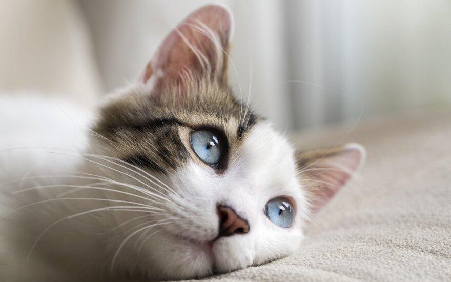 Kaip katės gerina jūsų sveikatą