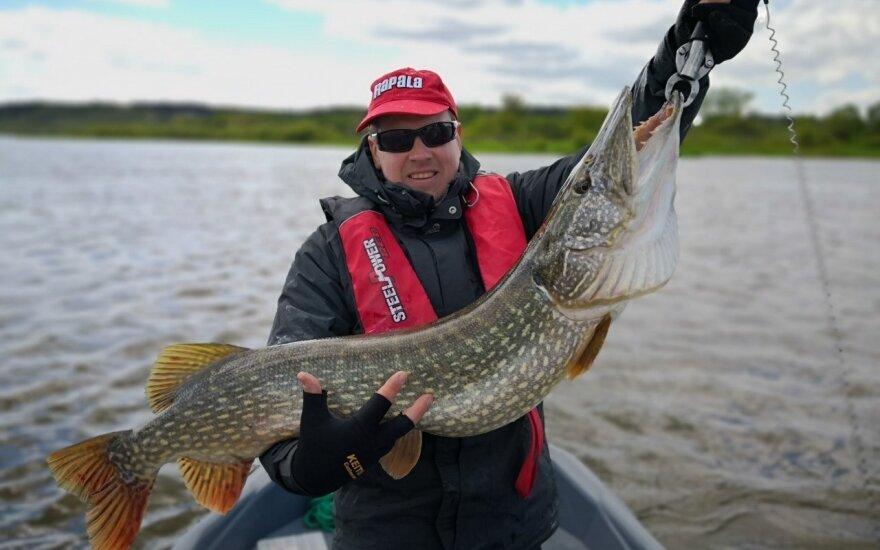 Žvejį nustebino sugautas laimikis: pasirodo, Lietuvoje dar yra stambių lydekų