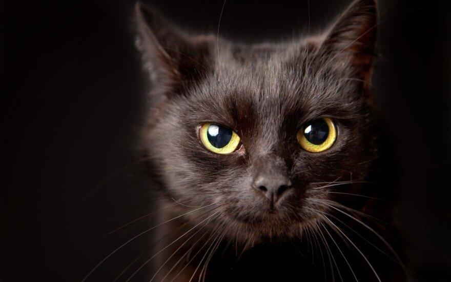 Kaip katės jaučia žmogaus mirtį