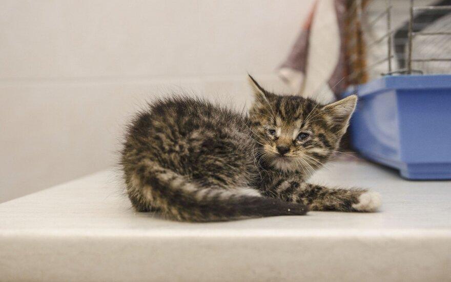Judrioje gatvėje išmestiems kačiukams reikia pagalbos