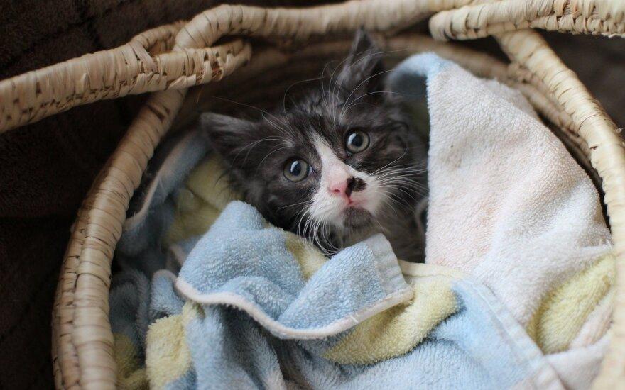 Širdžių ėdikas Romeo ieško namų!