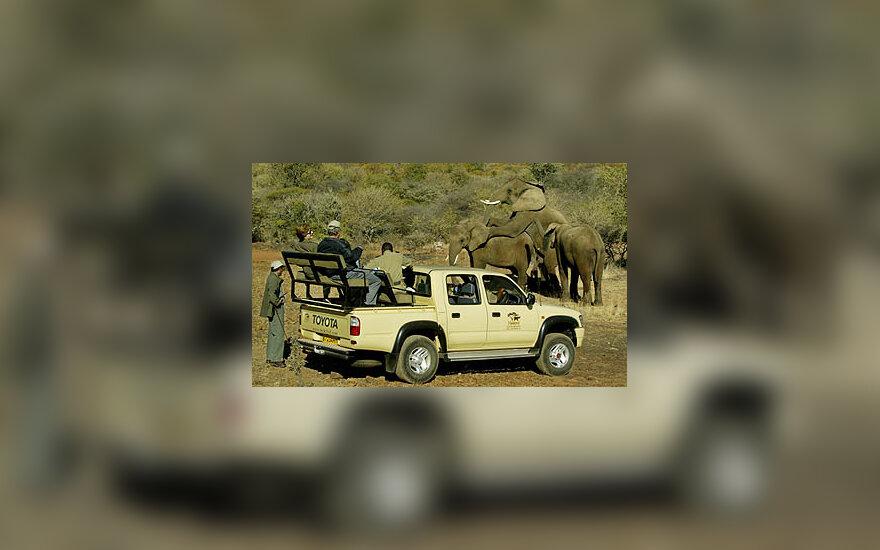 JAV pirmoji pora stebi dramblių meilės sceną