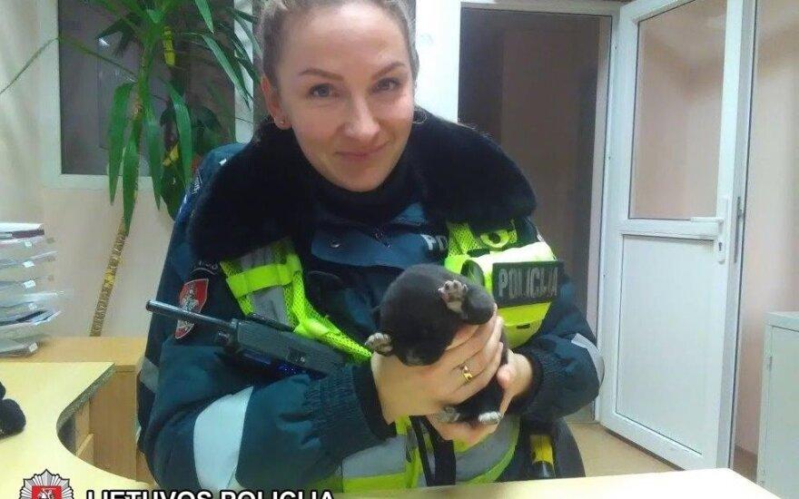 Policininkai išgelbėjo per speigą į šiukšlių konteinerį išmestą ką tik gimusį šuniuką