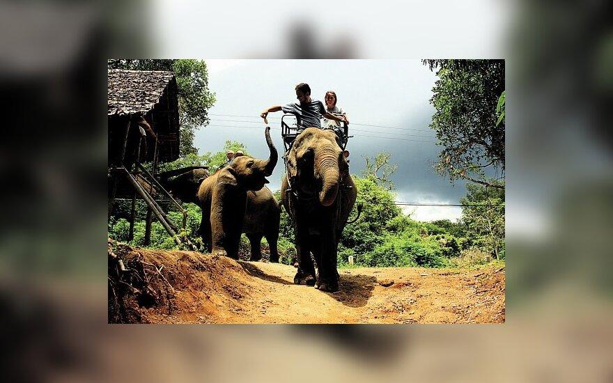 Žygis per Tailando džiungles. Sunkesniąją džiunglių atkarpą įveikti padėjo drambliai.