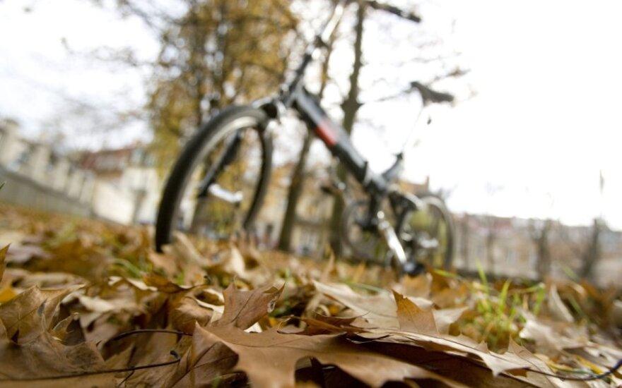 Kaune nėra kam išvežti nukritusių lapų