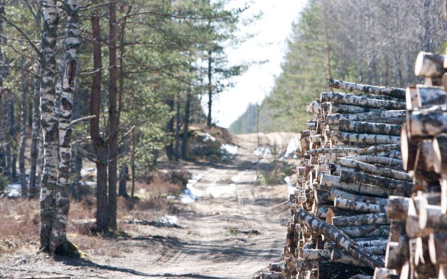 Keliai miškingose vietovėse – slidūs