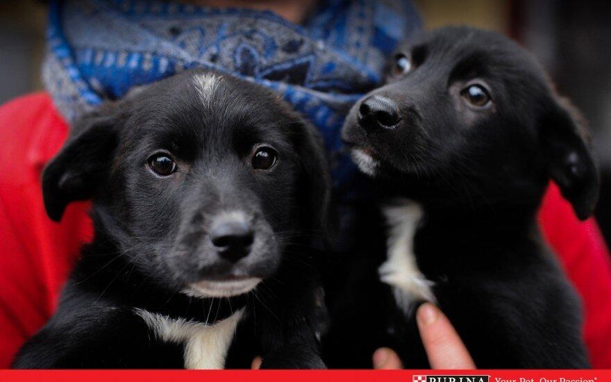Du šuniukai ieško namų