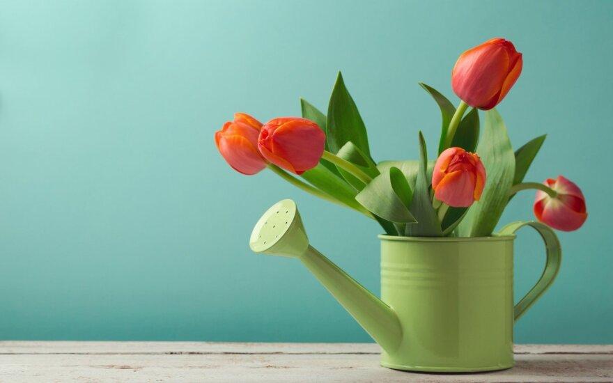 Astrologės Lolitos prognozė balandžio 2 d.: šeimos diena