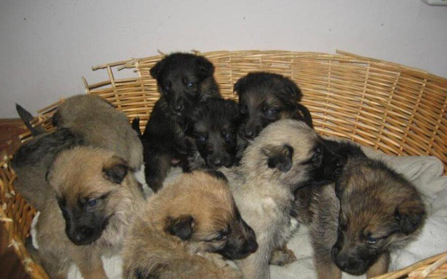 Šuniukai krepšyje (Asociatyvi nuotr.)
