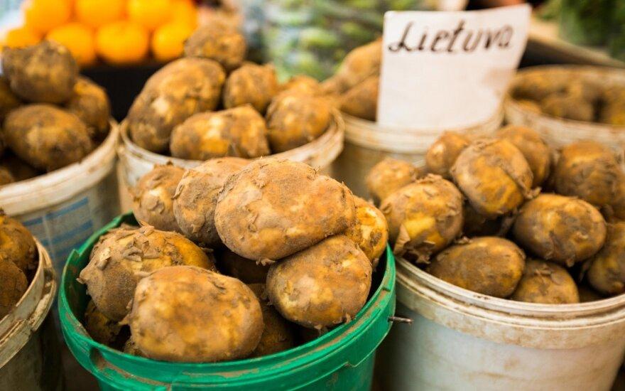 Šviežios bulvės pasirodė anksčiau, bet brangesnės