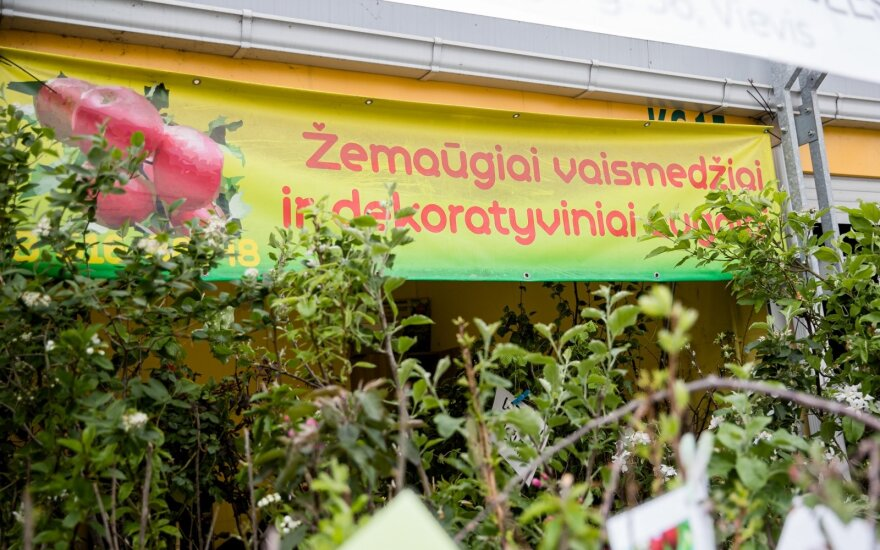 Lietuviai turguje šluoja naujoviškus pomidorų ir agurkų daigus: kokios kainos ir nauda