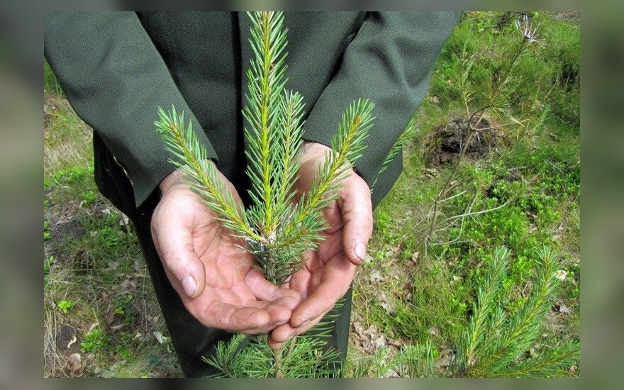 Miškas ir miškininkas/ Generalinės miškų urėdijos konkurso dalyvio nuotr