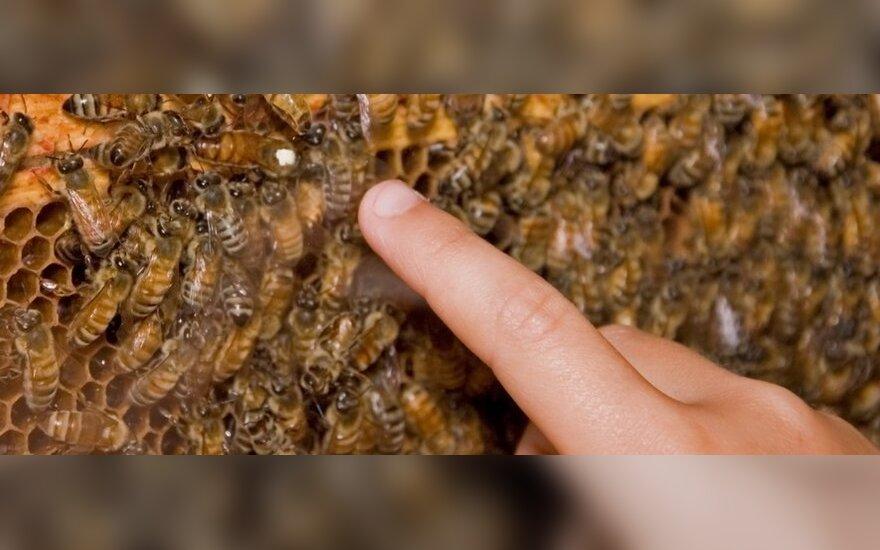 Bites skaičiuojantys mokslininkai: jei taip toliau, bus katastrofa